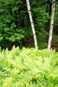 Le Bois, En Plein Air